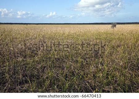 Jean Lafitte Preserve - New Orleans area, Louisiana - stock photo