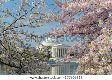 Jefferson Memorial during Cherry Blossom Festival in spring - Washington DC, United States - stock photo