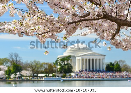 Jefferson Memorial during Cherry Blossom Festival in Spring - Washington DC, United States of America - stock photo