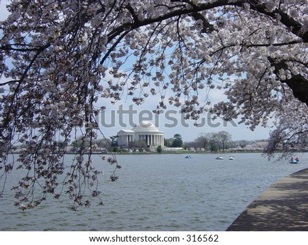 Jefferson Monument during the Cherry Blossoms