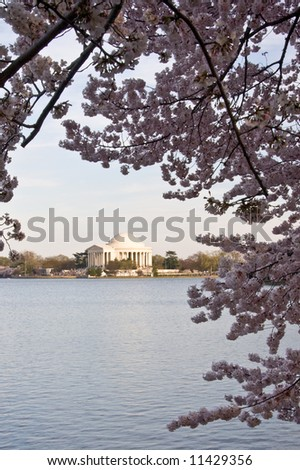 Jefferson Monument reflected in Tidal Basin and framed by cherry blossom trees - stock photo