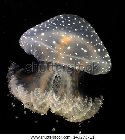 Jelly fish color at the black background - stock photo