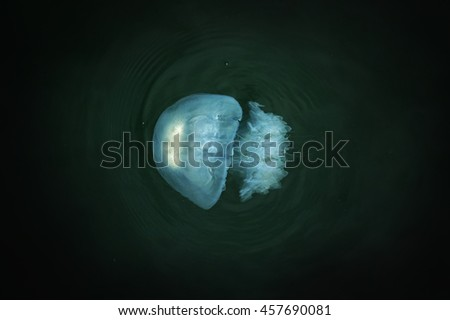 jelly fish on black water