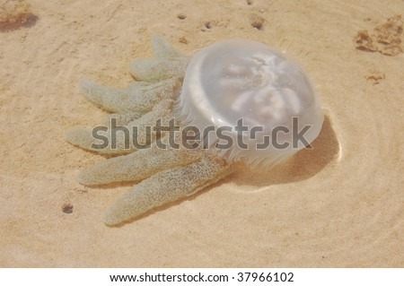 Jelly fish swimming in lagoon