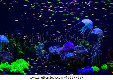 Jellyfish, corals and fish on the ocean floor.