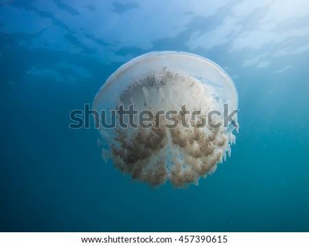 jellyfish in Andaman sea - stock photo