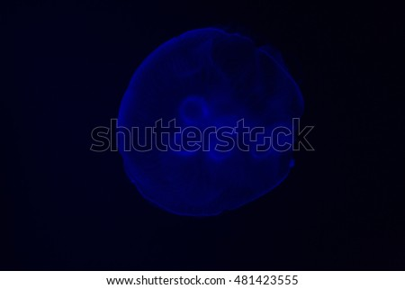 jellyfish in dark sea