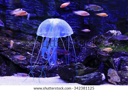 Jellyfish is a kind of Marine life, very beautiful - stock photo