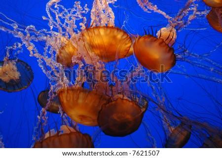 Jellyfish Underwater - stock photo