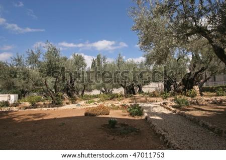 Jerusalem-Garden of Gethsemane - stock photo