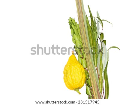 Jewish festival Sukkot four species lulav and esrog isolated on white background with copyspace. Palm branch, willow and myrtle leaves, bright yellow etrog. Room for text, copy space.  - stock photo