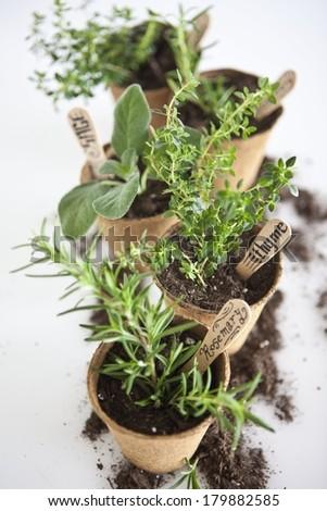 Jiffy Pots - stock photo