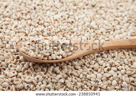 Job�¢??s tears with wooden spoon on Job�¢??s tears background
