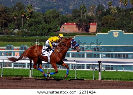 Jockey takes thoroughbred race horse down the home stretch. - stock photo