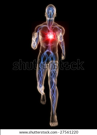 jogger - vascular system - stock photo