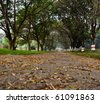 jogging track covered with leaves and trees on the side - stock photo