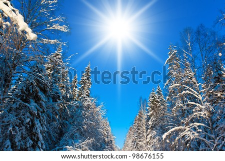 Jolly Winter and Sparkling Snowy Trees - stock photo