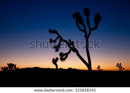 Joshua Tree at Dusk - stock photo