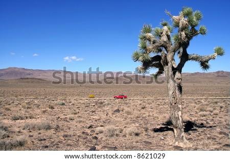 Joshua Tree in Death Valley - stock photo
