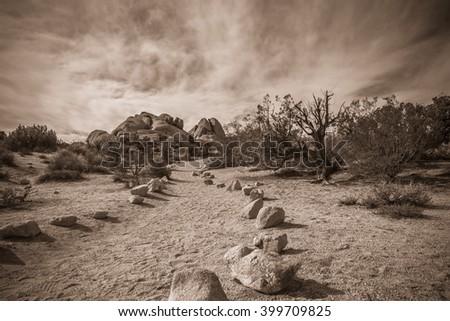 Joshua Tree Landscape in Sepia 7 - stock photo