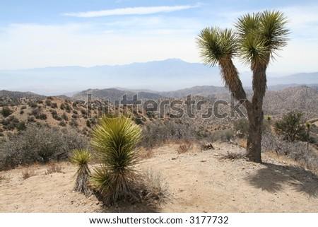 Joshua Tree National Park - stock photo