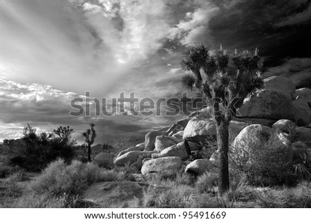 Joshua tree National Park - stock photo