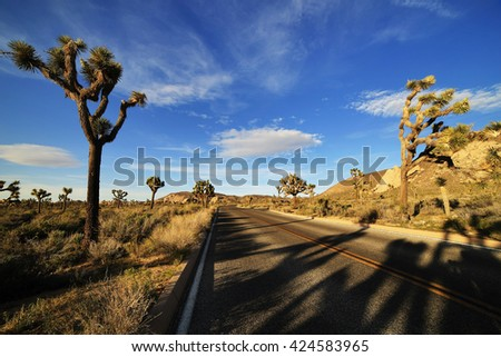 Joshua Tree National Park at Sunset, USA