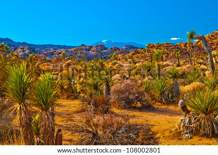 Joshua Tree National Park - California - stock photo
