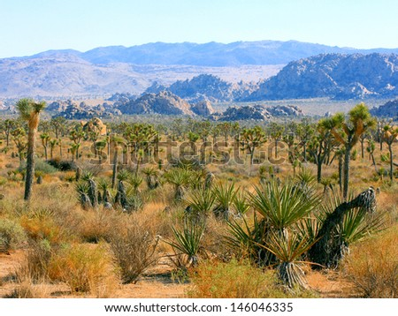 Joshua Tree National Park, California, USA - stock photo