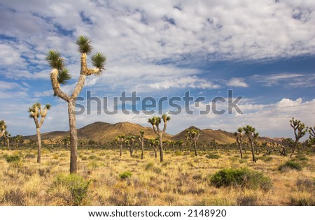 Joshua Tree National Park, in the Mojave Desert of Southern California.
