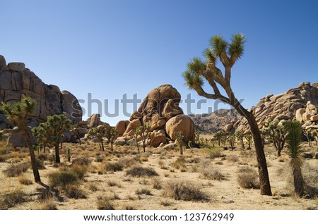 Joshua Tree National Park landscape with joshua trees and rock formations