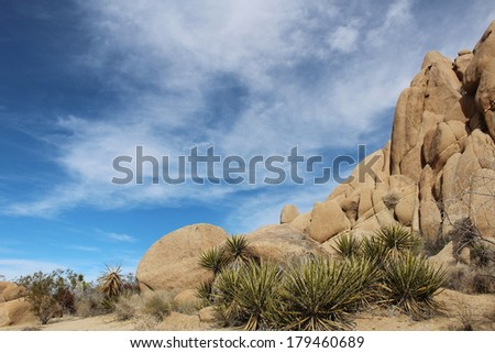 Joshua Tree National Park Landscape with Rocks and Plants