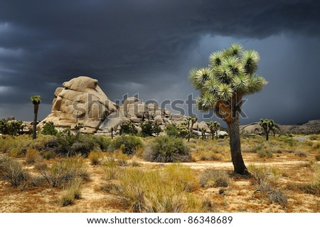 Joshua Tree National Park, USA