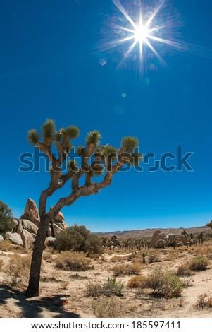 joshua tree scenary - stock photo