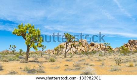 Joshua Tree With Monzogranite Rocks - stock photo