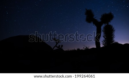 Joshua Trees in silhouette under the Mlky Way at Joshua Tree National Park - stock photo