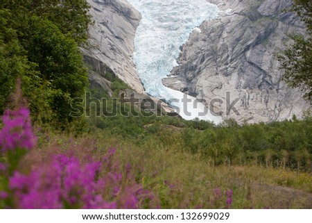 Jostedal glacier with pink flowers  in  Norway, Scandinavia, Europe - stock photo