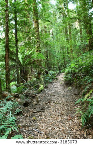 Journey through a temperate rainforest, with lush tree ferns and moss-covered mountain ash eucalyptus trees.  Victoria, Australia. - stock photo