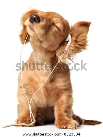 Joven cachorro escuchando música en los auriculares. - stock photo