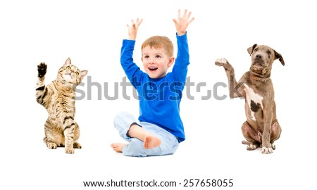 Joyful boy, cat Scottish Straight and pit bull puppy sitting with hands raised isolated on white background - stock photo