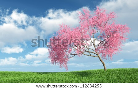 Judas tree on the grass with Sky Background