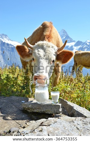 Jug of milk against herd of cows. Jungfrau region, Switzerland - stock photo
