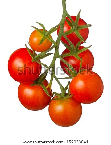 Juicy cherry tomatoes hanging on a vine, white background