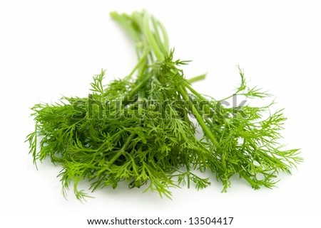juicy green dill on a white background - stock photo