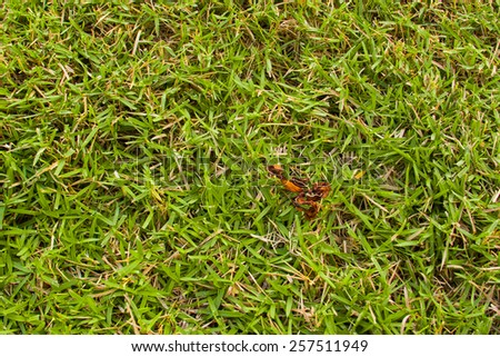 juicy green grass seamless texture background - stock photo