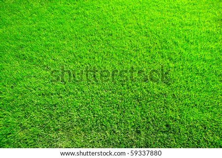 juicy green spring herb for background - stock photo