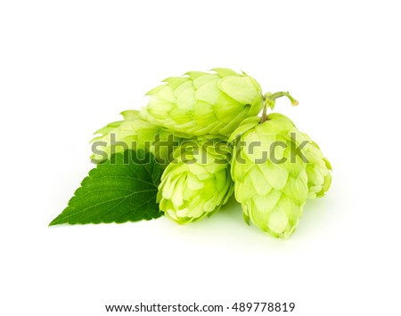 Juicy hop isolated on white