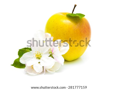 Juicy yellow apple with blossom isolated on a white background - stock photo
