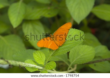 Juliette butterfly on plant - stock photo