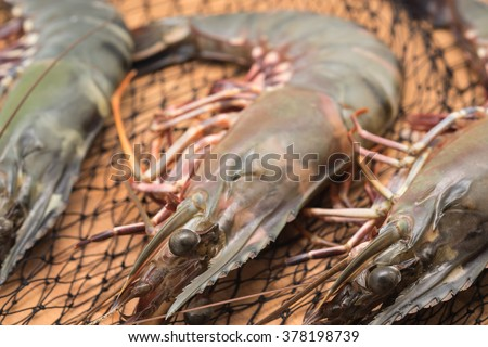 Jumbo raw black tiger shrimps or prawns for cooking background - stock photo